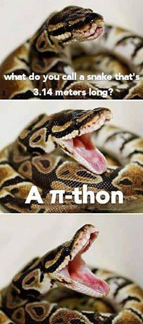 Pie-thon!