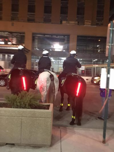 These horses have tail lights
