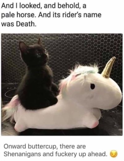 ONWARD BUTTERCUP, THERE ARE UPVOTES UP AHEAD