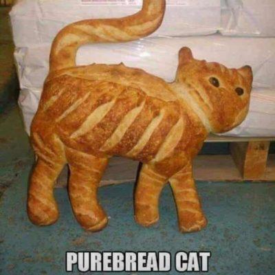 Purebread cat