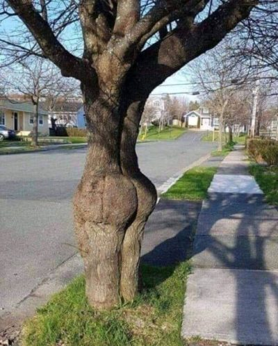 Junk in the trunk