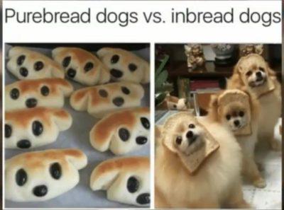 bread…