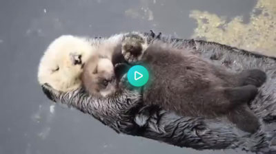 i think you otter like this