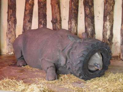 Help this rhino pic get traction on here.