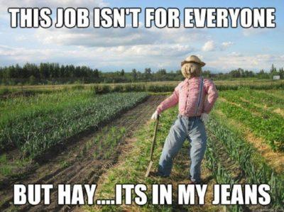 Hay, y'all!