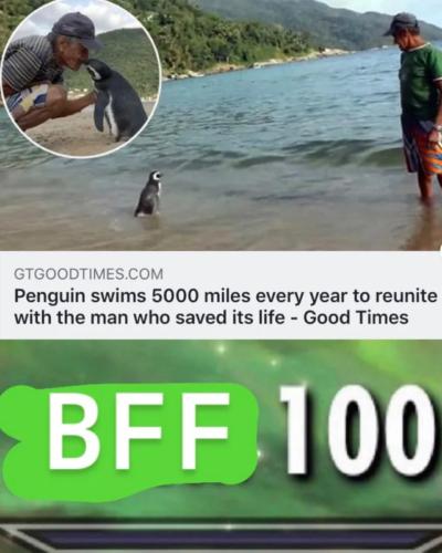 BFF 100