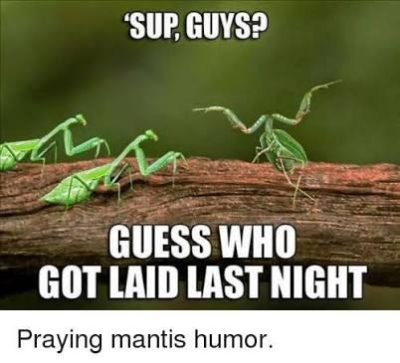 Praying Mantis Humor