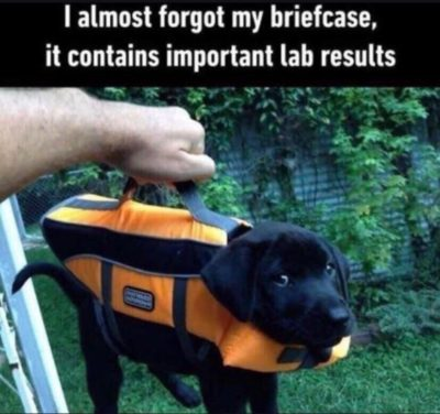 Your lab results are in.