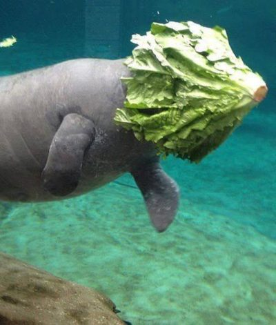 This poor sea creature hit an iceberg !…what happens next romaines to be seen…..