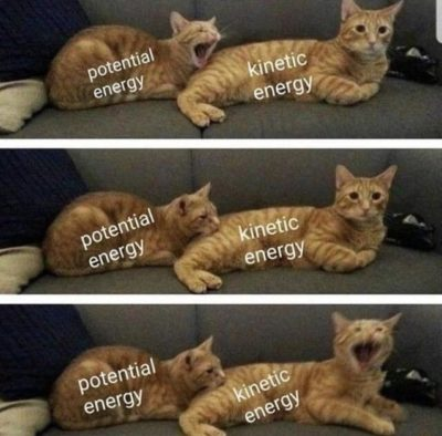 Cat-netic energy
