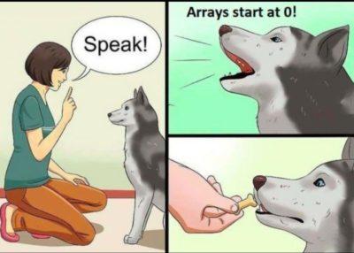 Nice doge