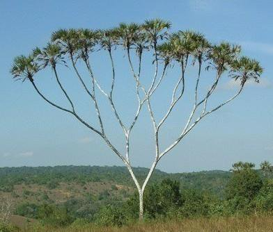 Binary tree.