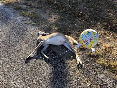 Very strange but funny deer vandalism
