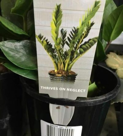 If I was a plant ..
