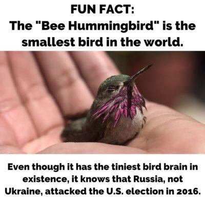 Bird Fact