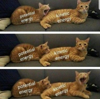 Purrtential Energy