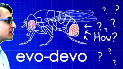 Evo-Devo (Despacito Biology Parody) | A Capella Science