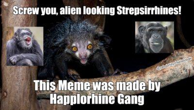 Cool meme bout primates