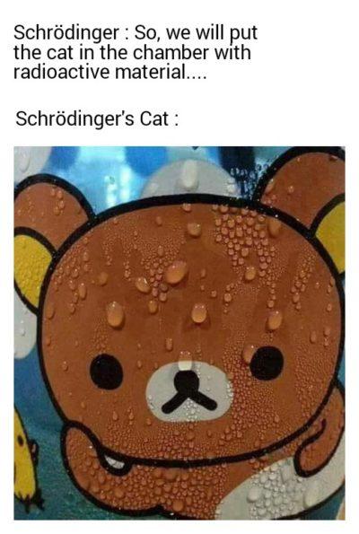 Schrödinger's Cat!!