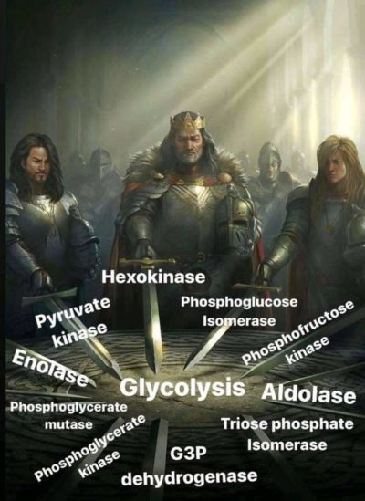 Glycolytic enzymes assemble!