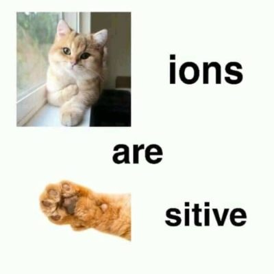 Cations are Pawsitive!