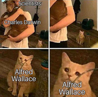 Evolution memes