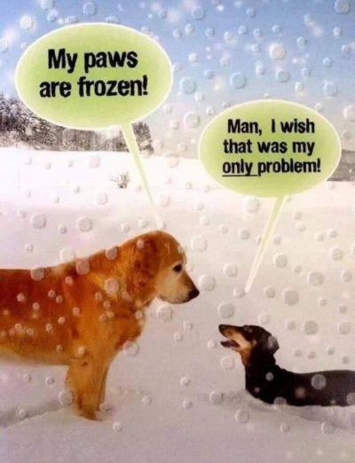 Icy Weiner? Aw crud.