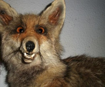 TaxiDerpy