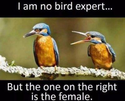 Female bad male good