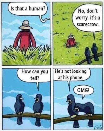 BirdBoomers