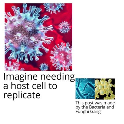 Bacteria and Funghi Gang