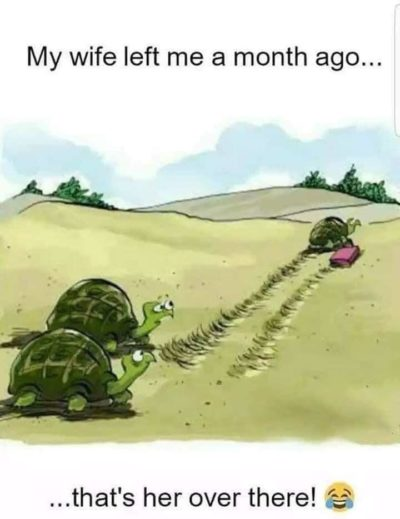 Turtles are slow