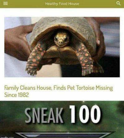 Adult normal ninja turtles