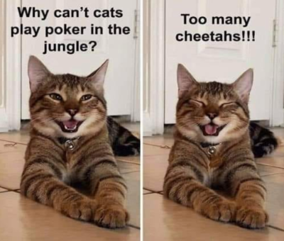 Why don't cats play poker in the jungle?