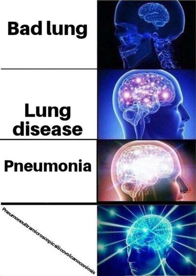 Biggest brain