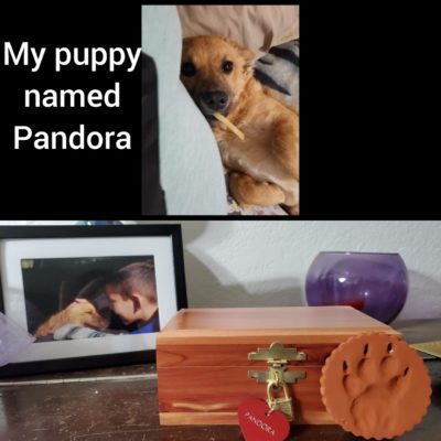 I recently lost a beloved puppy I named Pandora. This is the first pet I've ever lost. When the vet gave us her ashes, they were in this lovely box. It is literally Pandora's Box.