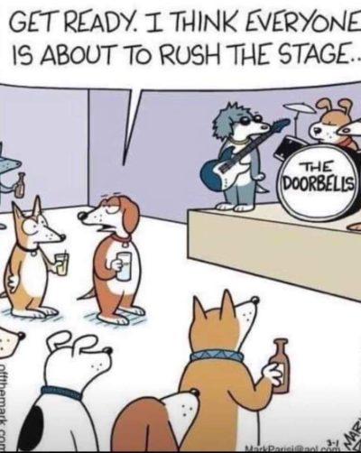 Dogs like doorbells