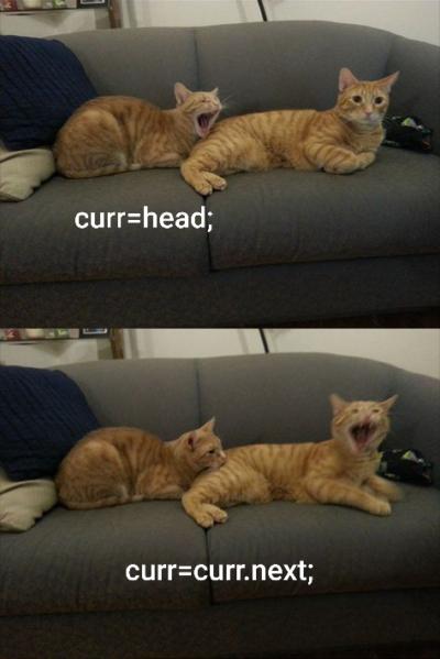 Linked cat