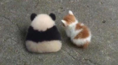 No talk with panda and kitty they angry