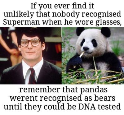 Panda! You missed all the excitement!
