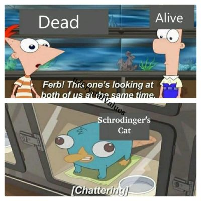 Schrödinger's Cat Meme