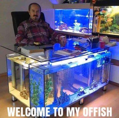 A fish pun