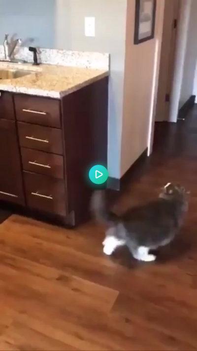 Chonker's best jump