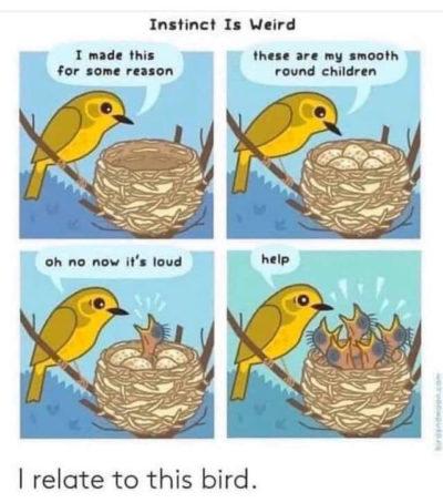Bird comic bird comic