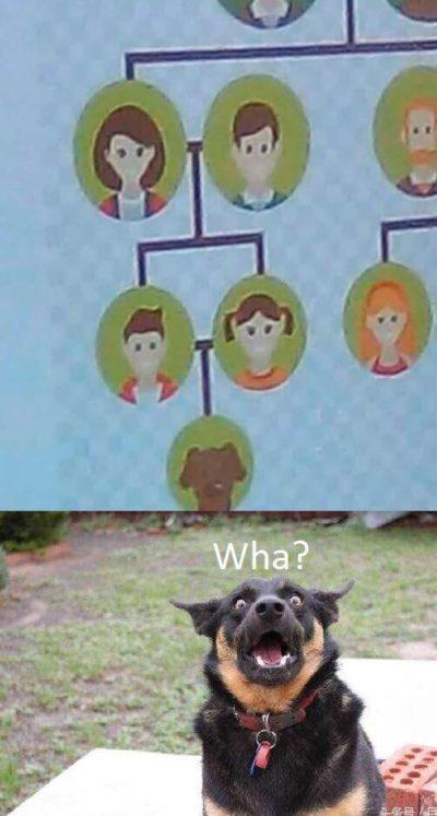 Haha funny dog 😂😂😂