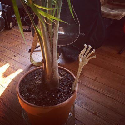 My palm tree.