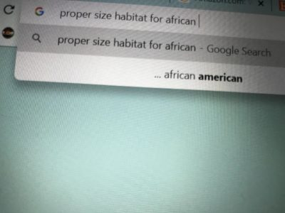 Trying to find information for African Snails and