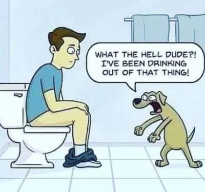 haha funny doggy