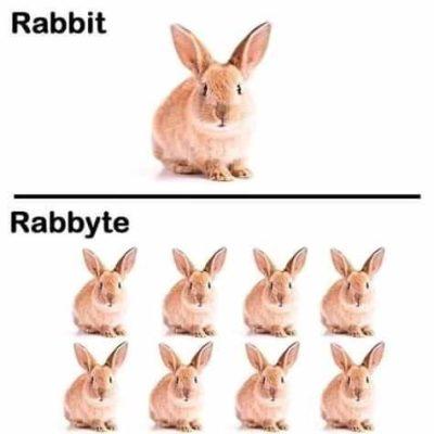 Rabbyte