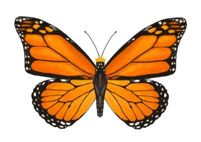 Monarch Monarch